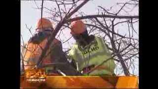 За два дня до зимы в Иркутске началась обрезка деревьев.(, 2013-11-29T04:48:51.000Z)
