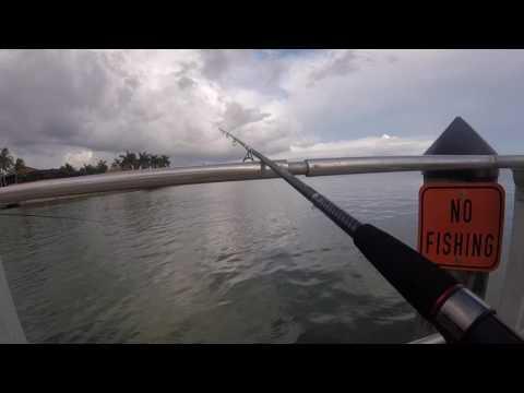 Fishing At Caxambas Park, Marco Island Florida.