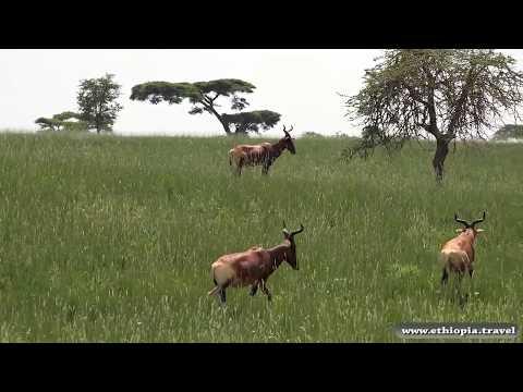 Ethiopia - Sankalle National Park