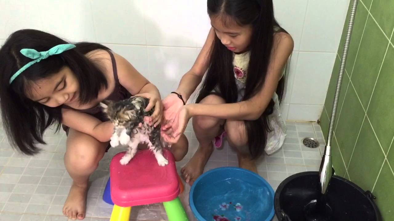 อาบน้ำแมวเด็ก ของลาเต้กับแพนเค้ก
