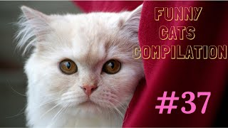 Funny cats compilation #37  /2019/