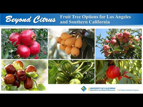 Beyond Citrus: Fruit Tree Options For Los Angeles And Southern California