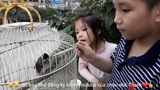 Trung Tyt chơi♥️funny kids songs♥️video clip♥️nhạc tiếng anh cho bé♥amazing♥discovery