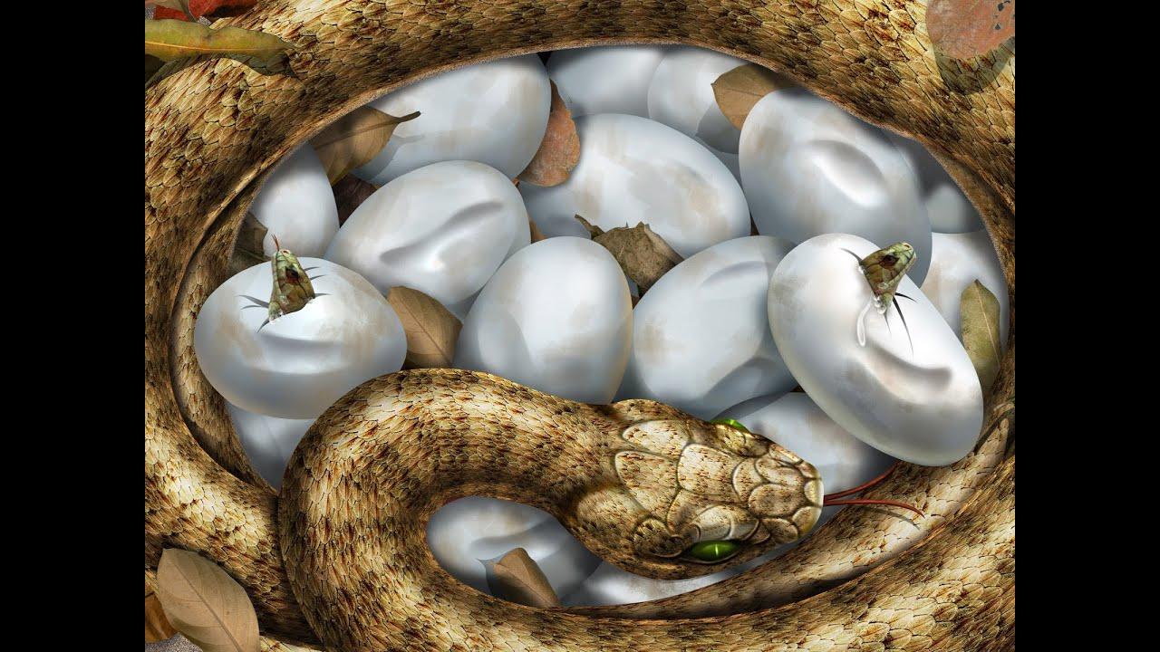 snake hd 1080p youtube