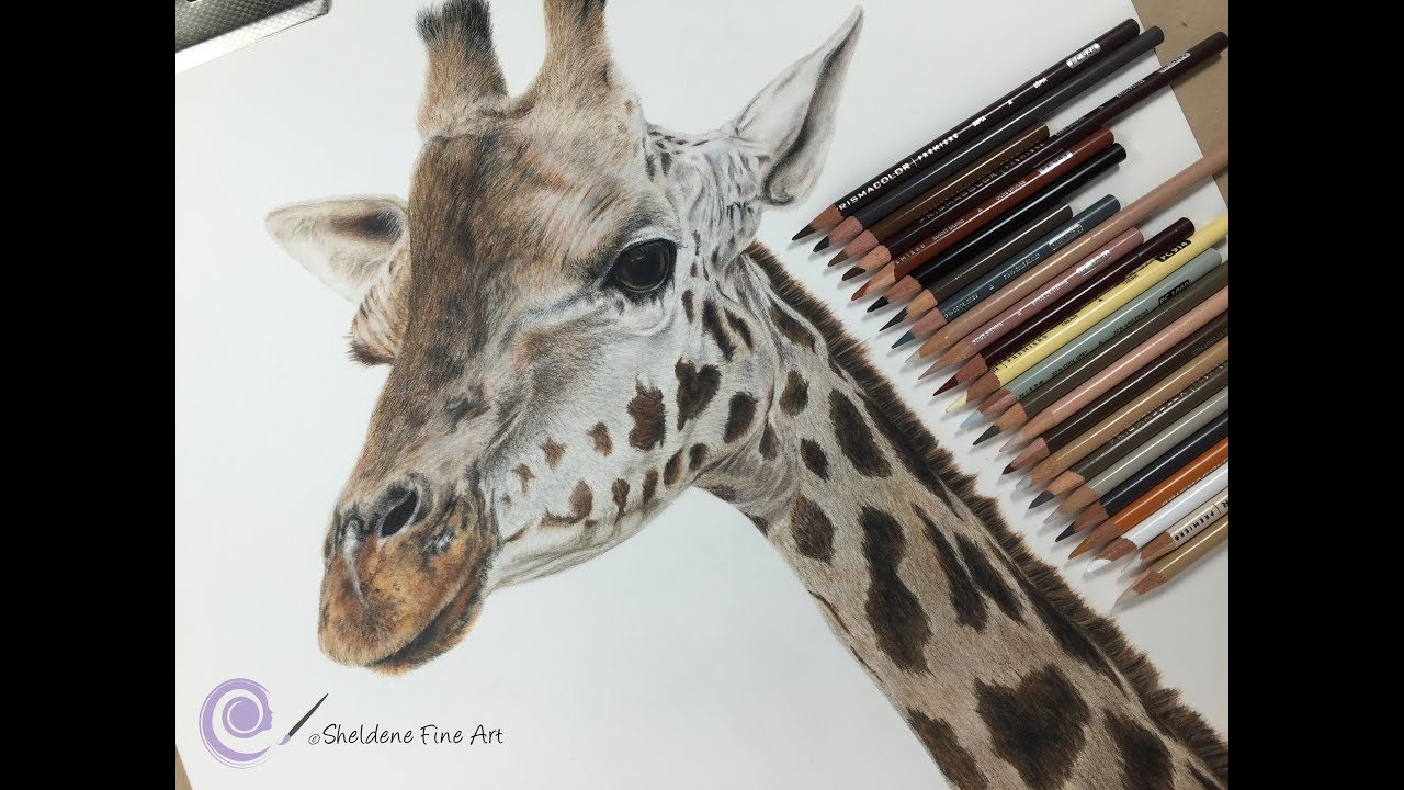 Uncategorized Giraffe Drawings timelapse drawing a realistic giraffe channel sheldene fine art youtube