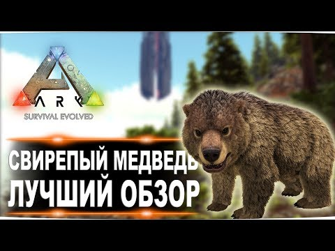 Свирепый медведь (Direbear) в АРК. Лучший обзор: приручение, разведение и способности медведей в ark