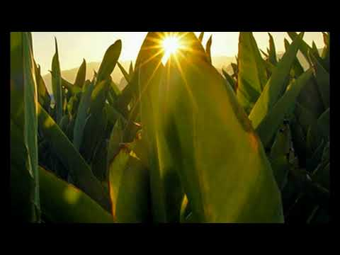 76 New Report Debunks 'Myth' That GMOs Are Key to Feeding the World