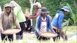 Rice Paddy Bali Ecovillage - Indonesia