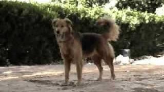 Kuchi the dog