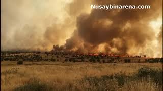 Nusaybin Bagok dağında çıkan yangın sürüyor