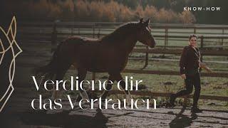 Vertrauen zum Pferd aufbauen | HORSENSATION
