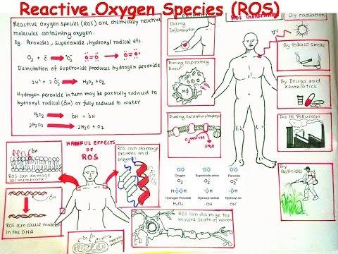 Reactive Oxygen Species and oxidative stress