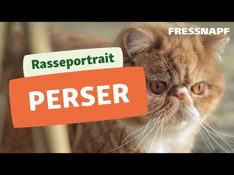 Perser Katze Rasseportrait | FRESSNAPF