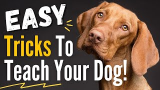 10 Impressive and Easy Dog Tricks to Teach Your Dog  They are Easier than you think!