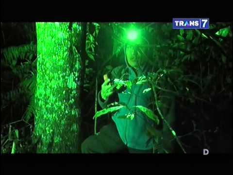 Jejak   Jejak Misterius Eps Naga Bermahkota Susun Tiga Di Hutan Girimanik Part 3