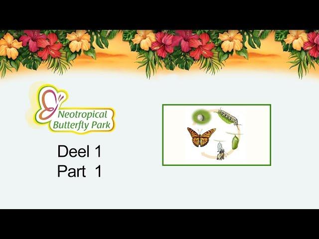 Neotropical Butterfly Park - DEEL 1