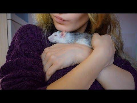 Как подружиться с крыской ► Моя история приручения, дружбы и любви
