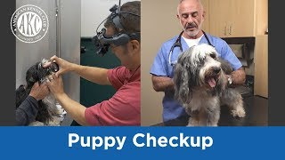 Puppy Checkup - Vet Tips with Dr. Klein