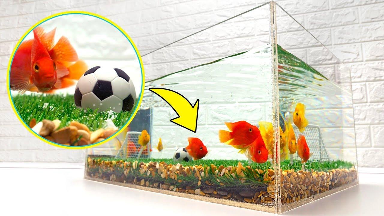 Photo of كرة قدم للأسماك! لنصنع معا حوض سمك – الرياضة