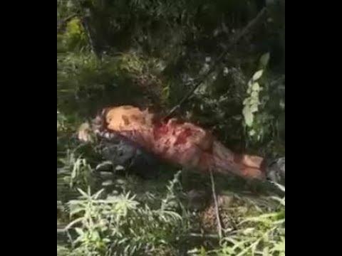 Медведь загрыз человека. 2019 Хабаровский край