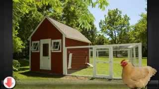 Ideas To Build A Better Chicken Coop