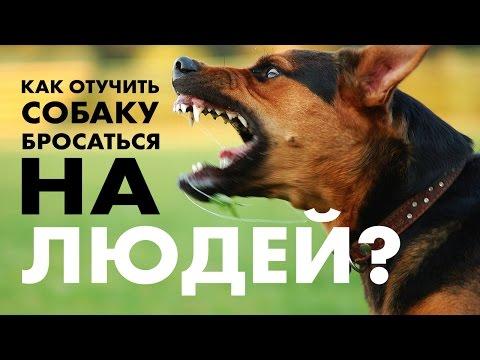 Вопрос: Как отучить щенка бросаться на других людей, как отучить рычать на них?