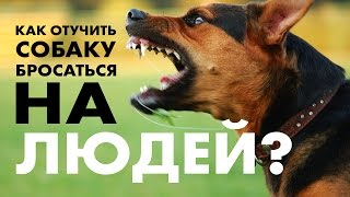 Домашняя собака бросается на людей и собак