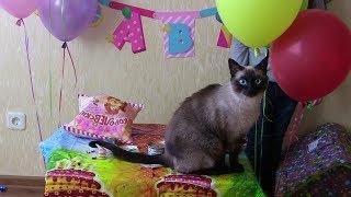 Нашему коту Кузе 1 год.Празднование и подарки.