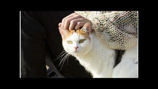 江口のりこ、猫の声でドラマ出演.