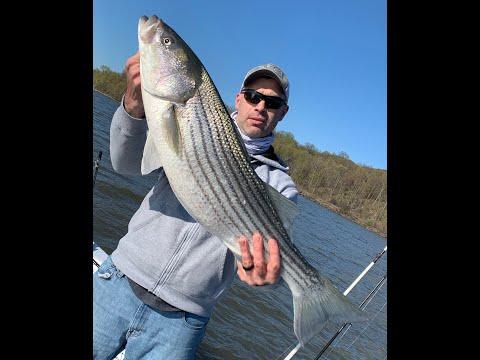 Striped Bass Fishing 2020 Hudson River, New York