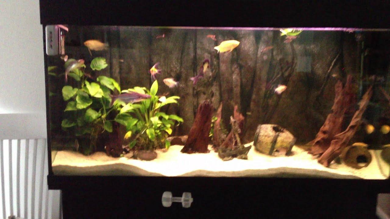fiske akvarium til salg