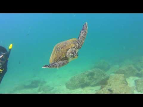 Scuba Diving at Fujairah - UAE