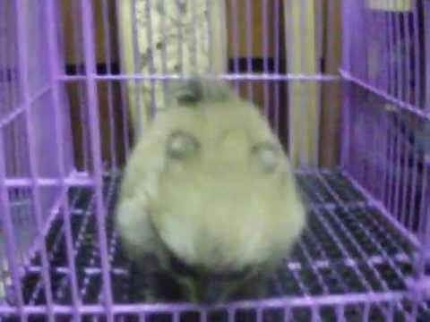 ปอมทีคัพ  093-789-2353 www.thaidoghousefarm.com