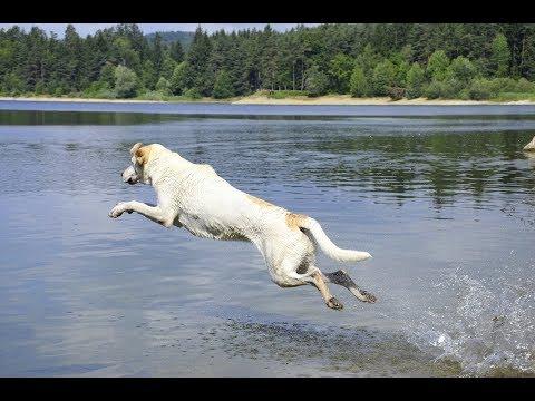 complications dog funny and smart - super fun video