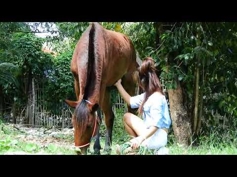 basic horse care