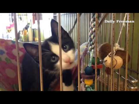 Thumbnail for Meet Puddy at the Ulster County SPCA
