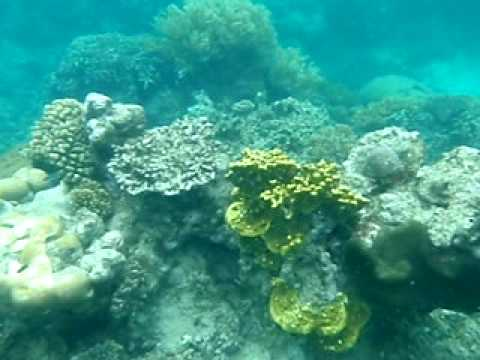 Great Barrier Reef 1, Cairns, Australia