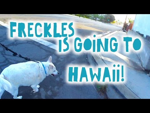 🐕 Getting Freckles to Hawaii || No Quarantine 🐾