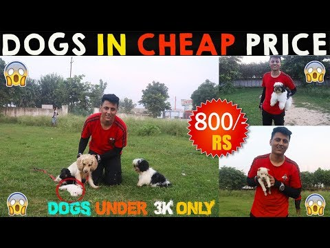 CHEAP DOGS MARKET   WHOLESALE, RETAIL   DOGS IN CHEAP PRICE WITH PHONE NUMBER