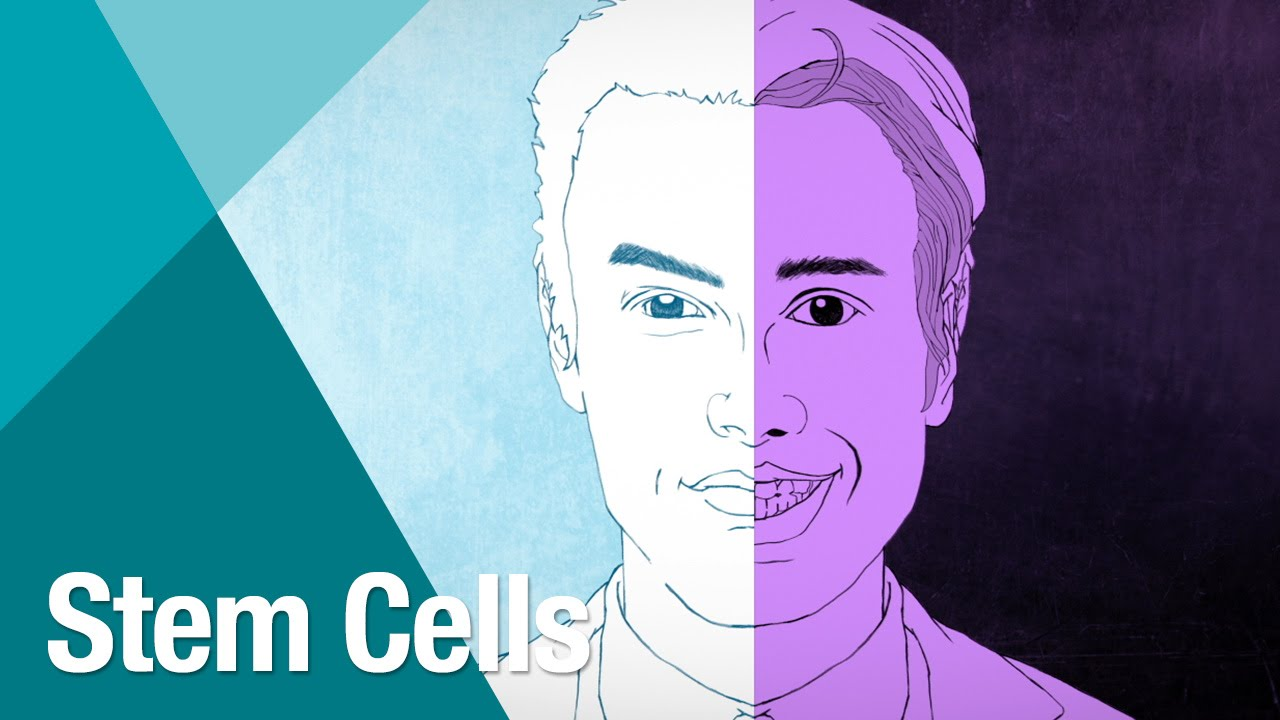 Stem cell research should be allowed