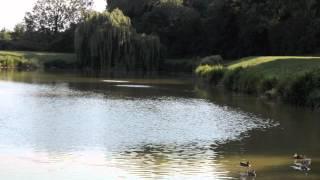 FENDICKS FISHERY, WHITTINGTON, NORFOLK