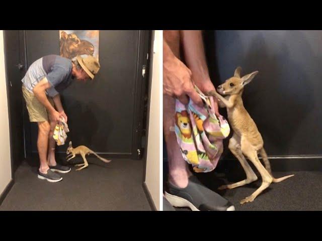 Cute Baby Kangaroo Takes First Steps