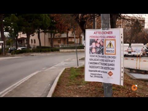 Chiodi nei wurstel per uccidere i cani: l'intervento di Lav Ancona