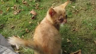 JAROMIN - DPS : kotek rudy Placek  bez oka już oswojony bardzo lubi pieszczoty : 15.09.2018