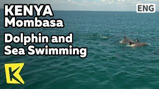 【K】Kenya Travel-Mombasa[케냐 여행-몸바사]인도양 돌고래와 수영/Dolphin/Sea/Swim/Ocean/Water Sport/Scuba Diving
