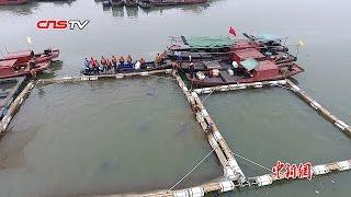 中国濒危物种江豚搬家 从鄱阳湖迁运到湖北湖南