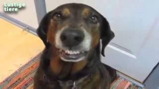 lustige schuldige hunde video kompilation 2014