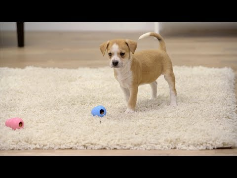 stop-puppy-separation-anxiety-with-kong-toys-|-chewy