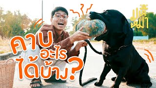 (EN sub) Let's find out what objects a Labrador can hold? - Ma Hue Mha EP93