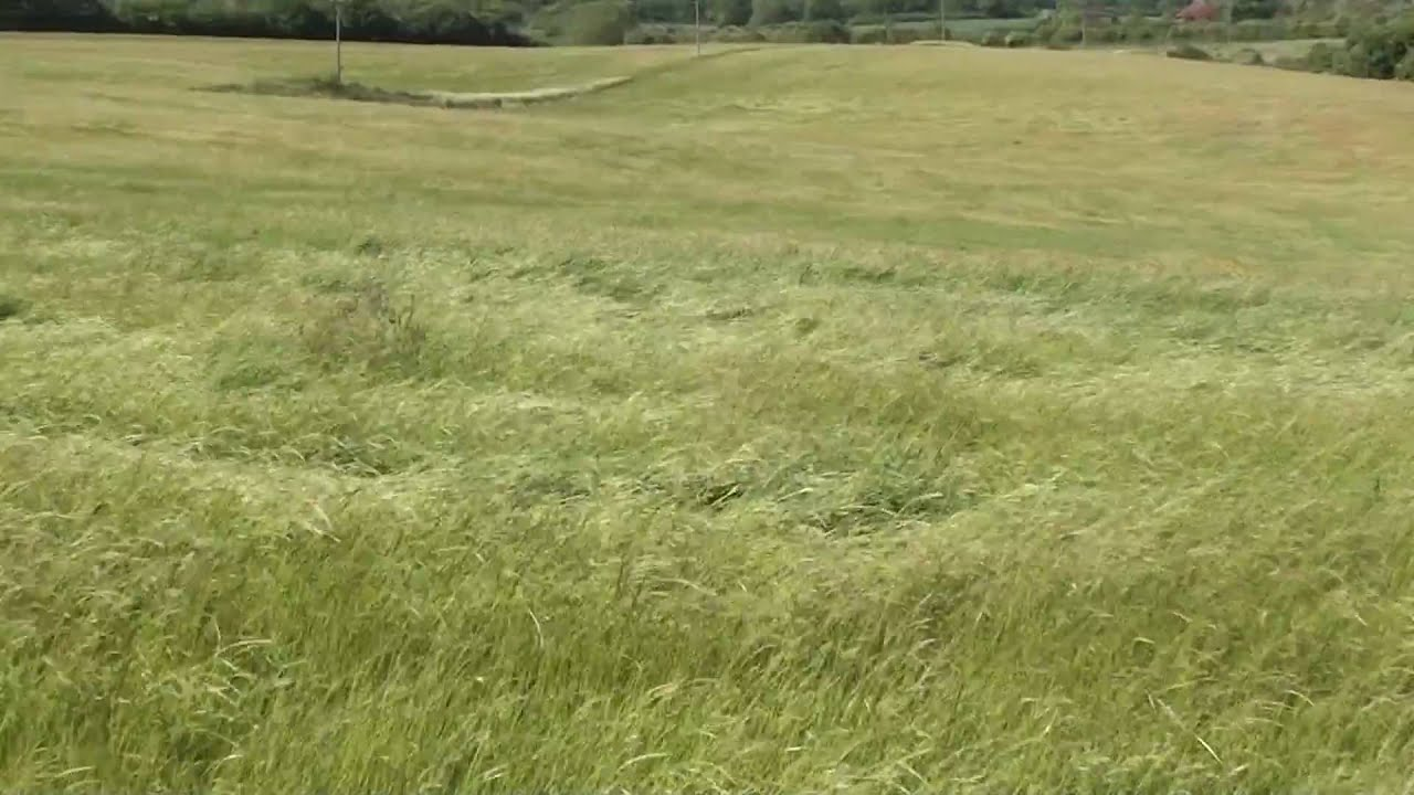 fields and grass - photo #20